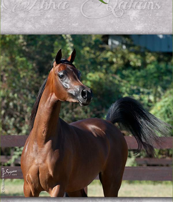 Global Views Horse: Horses Of The World ... Arabian Horses ... Marieta Salas