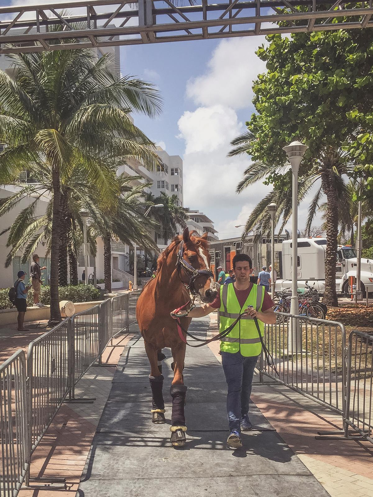 LGCT 2016 - Top groom Sean Lynch leads Citizenguard Taalex to his stable in Miami Beach
