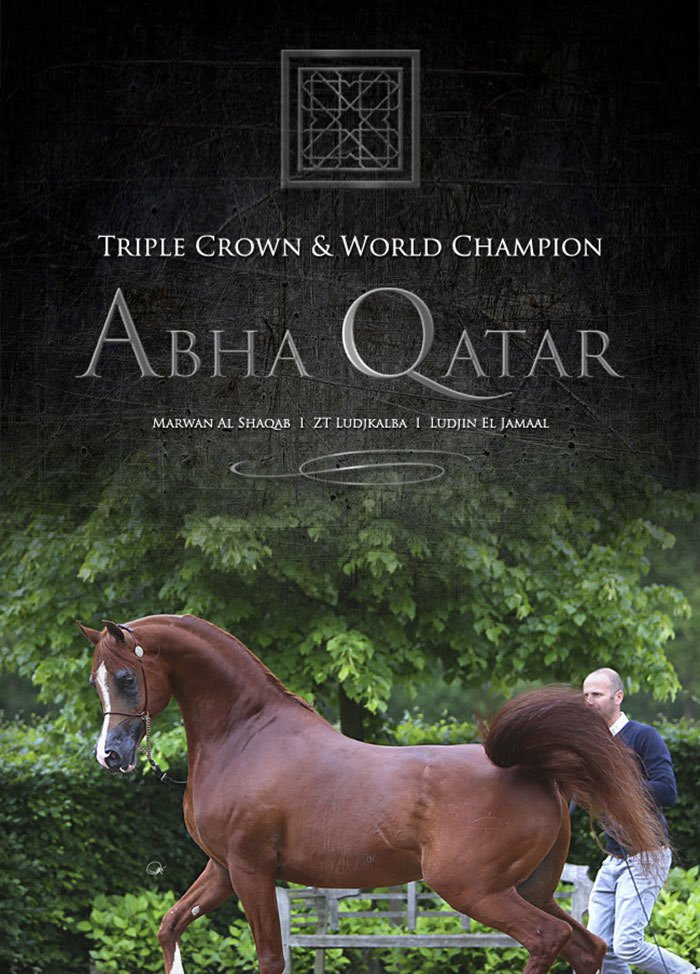 Abha Qatar - Privilege Stallion Collection 2017